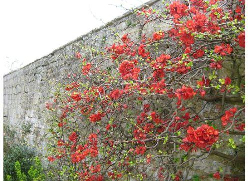 merton-flowers.jpg