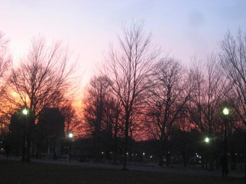 winter trees boston pink sunset