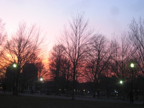 winter trees boston pink sunset