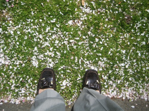 boston public garden loafers flower petals