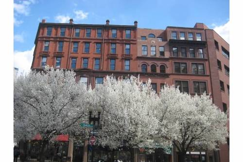 blooming trees charles st south