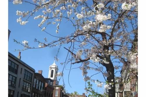 blossoms charles street boston