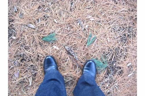 boots pine needles amherst ma