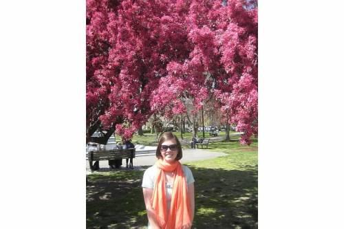 pink tree boston public garden