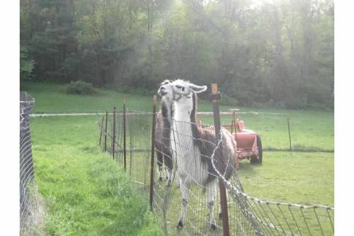 llama starlight bed and breakfast