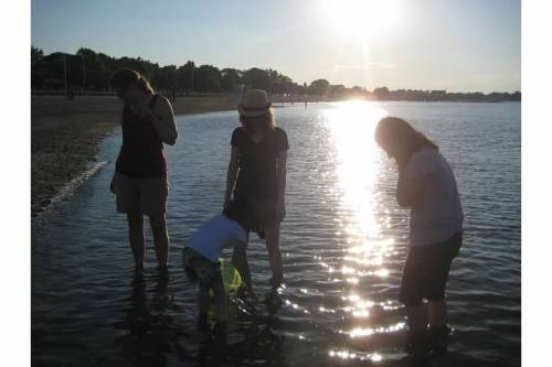 wading shells atlantic ocean summer sun
