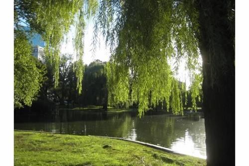 willow tree light public garden boston autumn fall