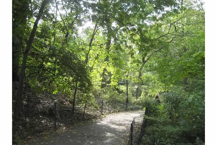 central park ramble paths walk new york