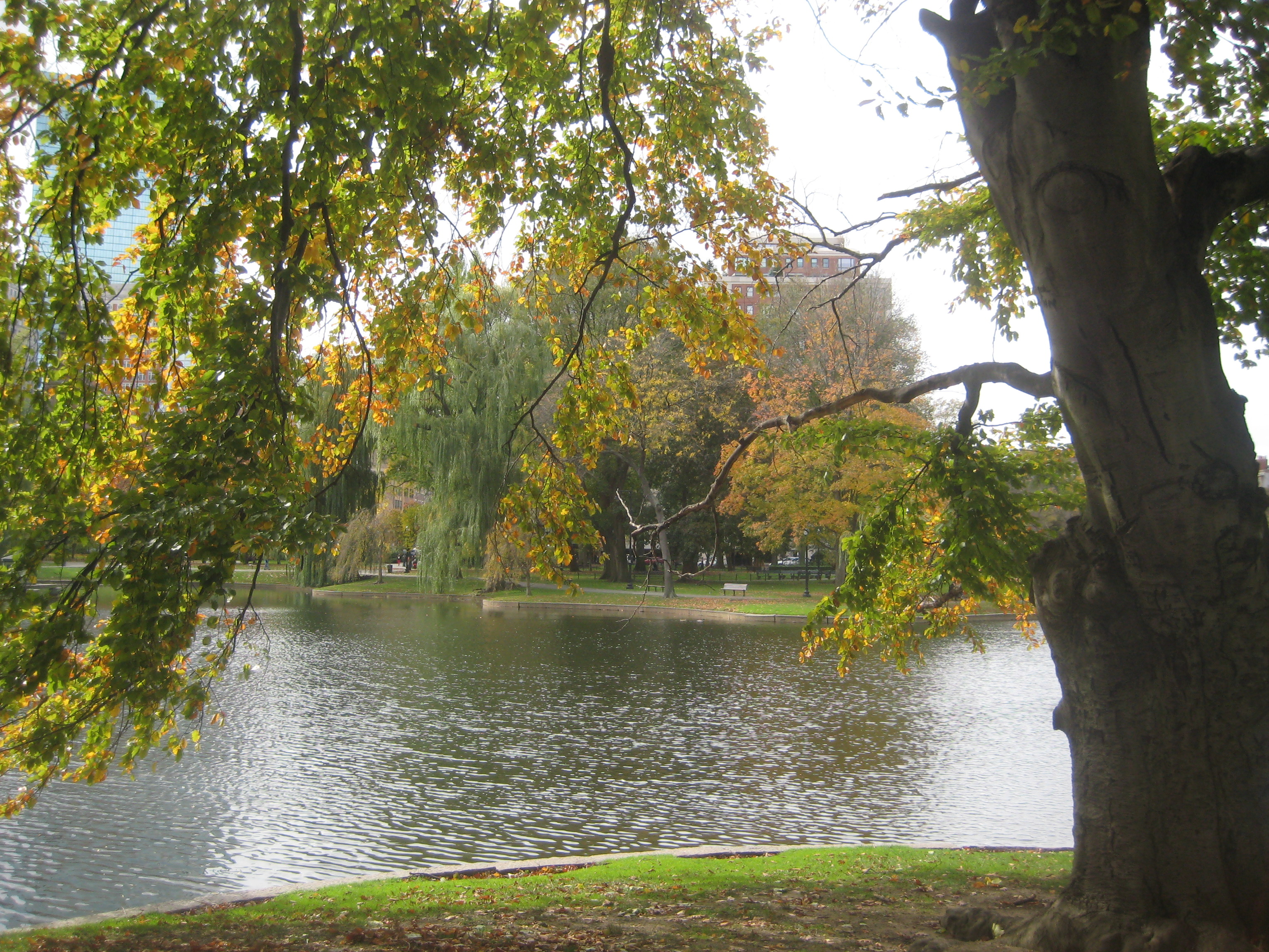 boston public garden tree lake autumn fall
