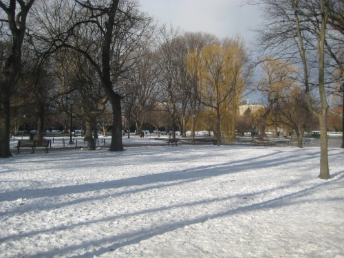 snow boston public garden winter shadows trees