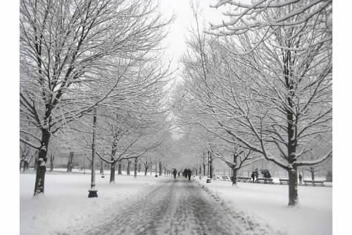 snow path boston common trees winter