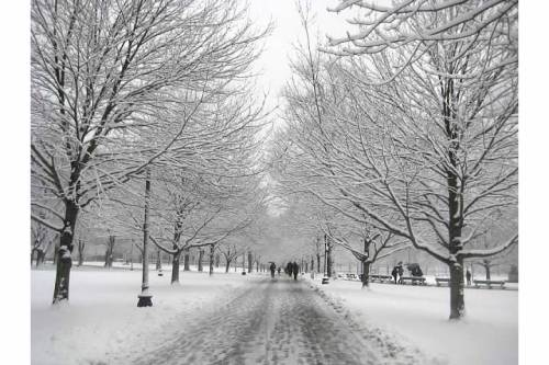 snow path boston common trees winter