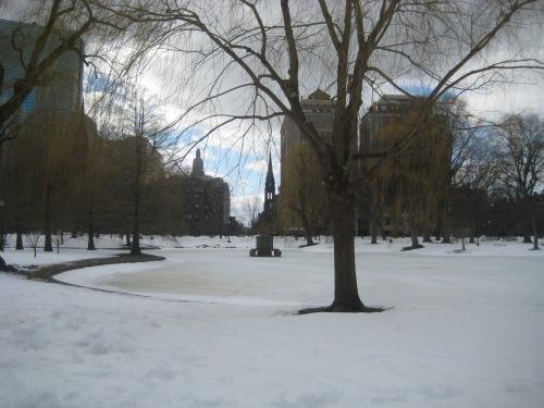 snow public garden boston trees february winter nemo