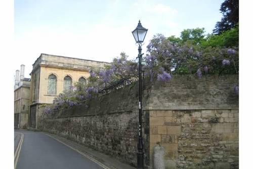 queens lane wisteria oxford