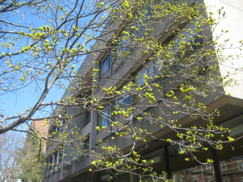 budding trees gutman library harvard square