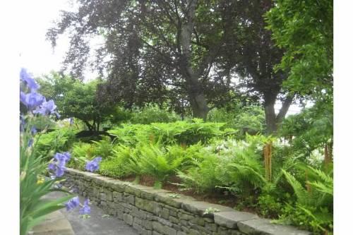 irises ferns garden