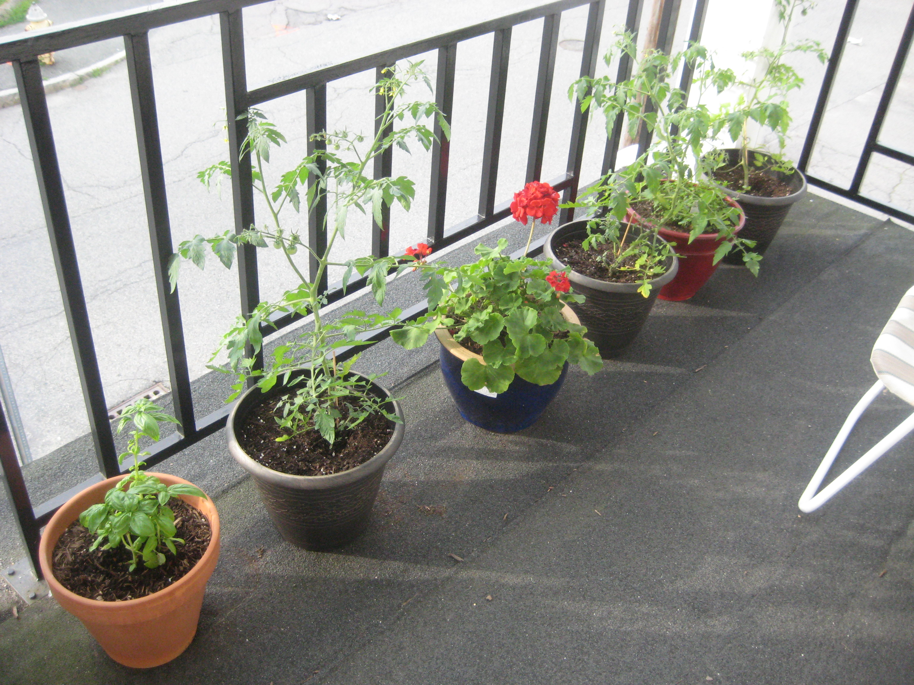 Balcony garden update cakes tea and dreams for Balcony vegetable garden