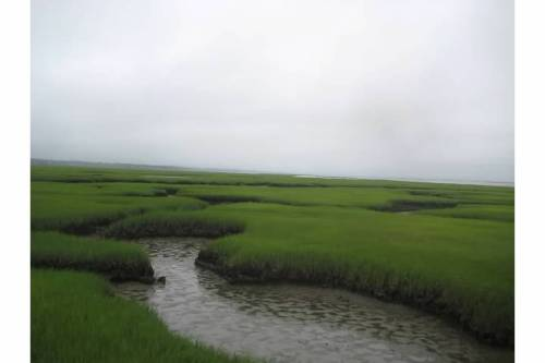 grays beach marshes