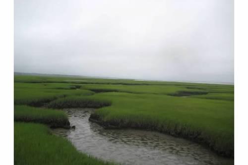 grays beach marshes