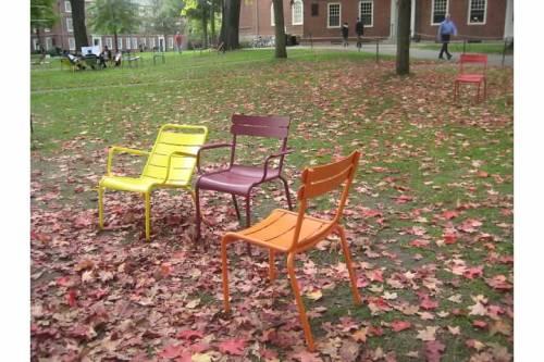 chairs harvard yard cambridge ma autumn leaves