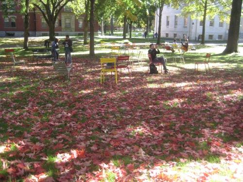 red leaves harvard yard