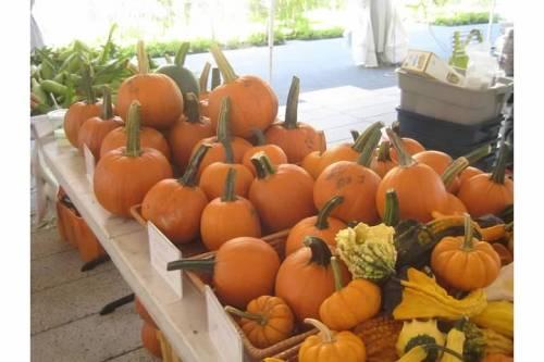 pumpkins farmers market
