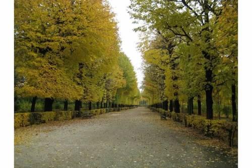 schonbrunn-palace-park-trees