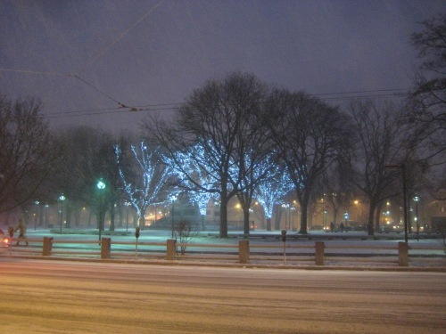 snow trees blue lights