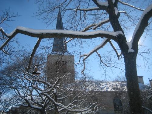 snow trees first parish church cambridge