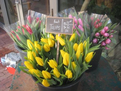 tulips harvard square