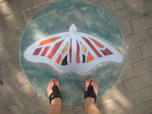 mosaic butterfly austin tx