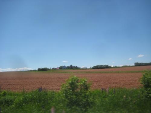 pei red fields summer
