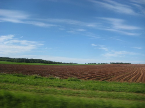 pei red fields blue sky