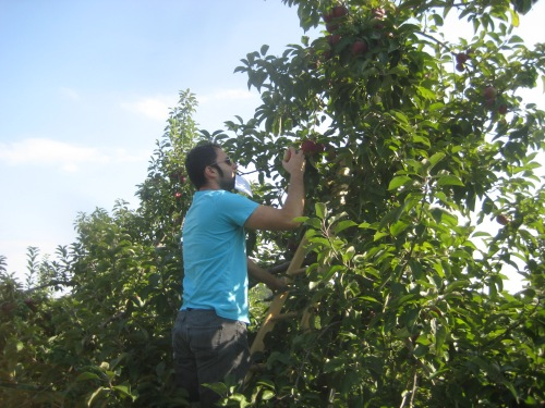 jer climbing tree orchard