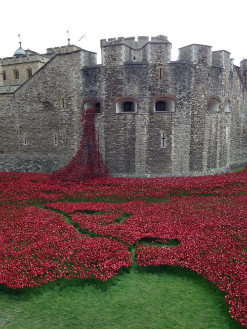 tower of london poppies spill