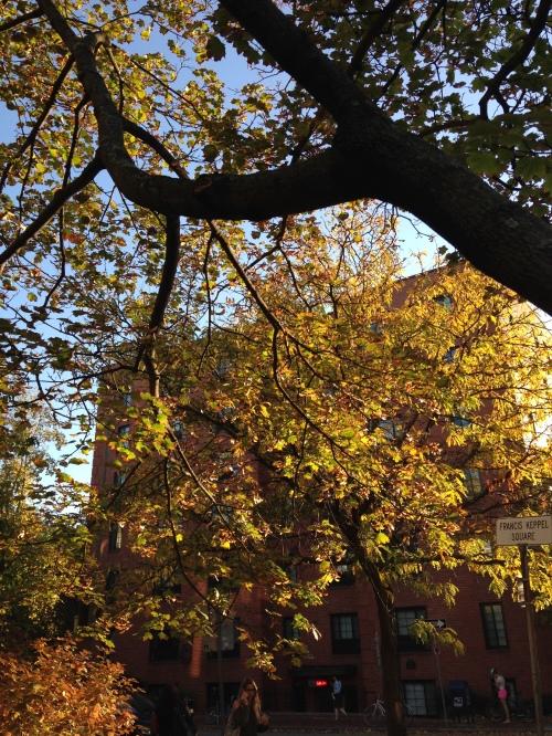 green gold leaves light autumn