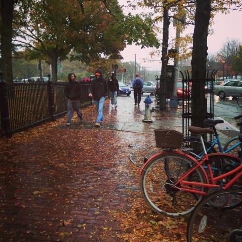 leaves fall cambridge ma