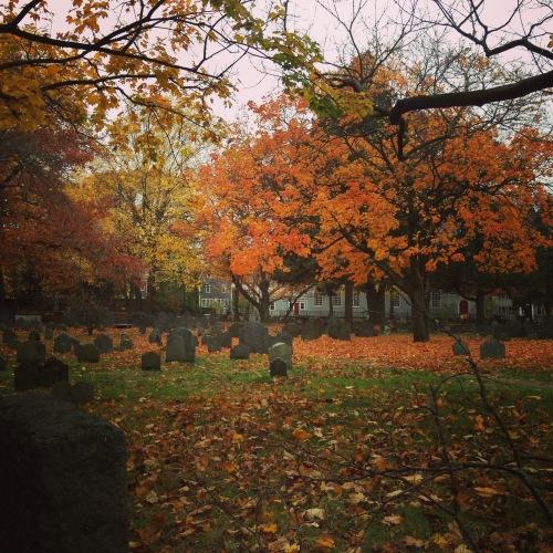 orange trees leaves cambridge graveyard