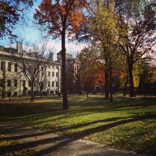 harvard yard autumn light leaves