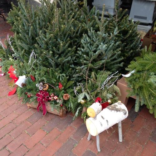brattle square florist christmas reindeer