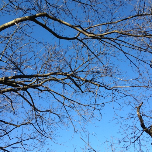 blue sky bare branches