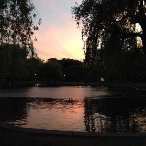 sunset sky boston public garden