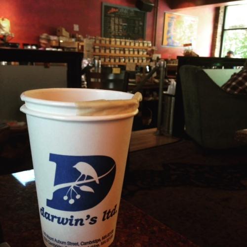 darwins cafe cup