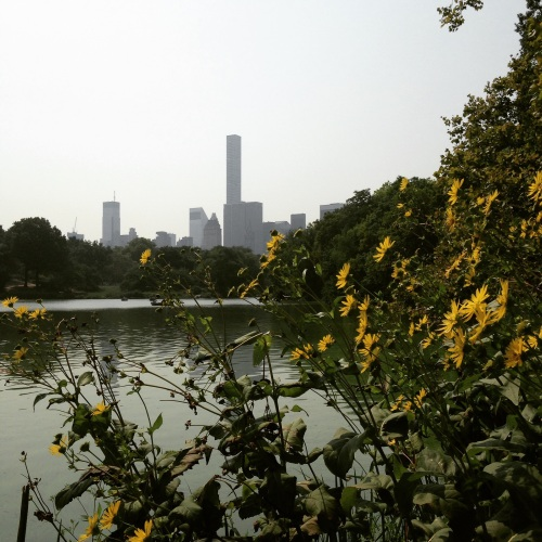 central park yellow flowers nyc