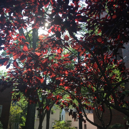 red leaves sunshine
