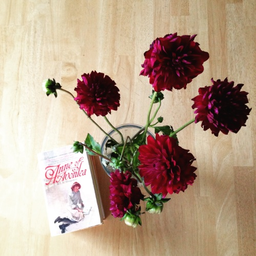 anne of avonlea dahlias
