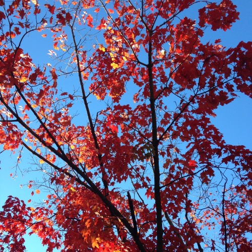 red leaves blue sky light