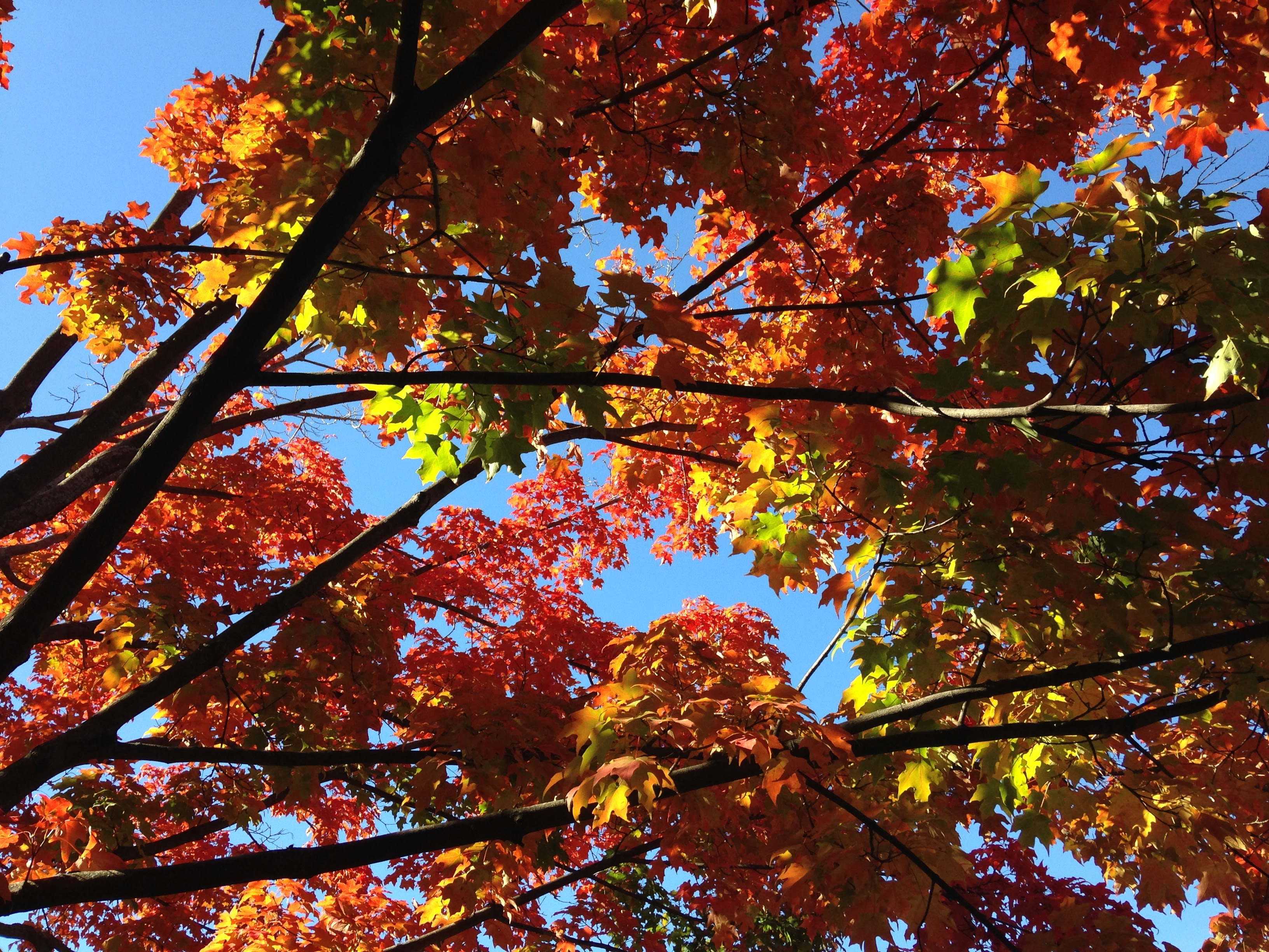 Red Yellow Leaves Autumn Light. U201c