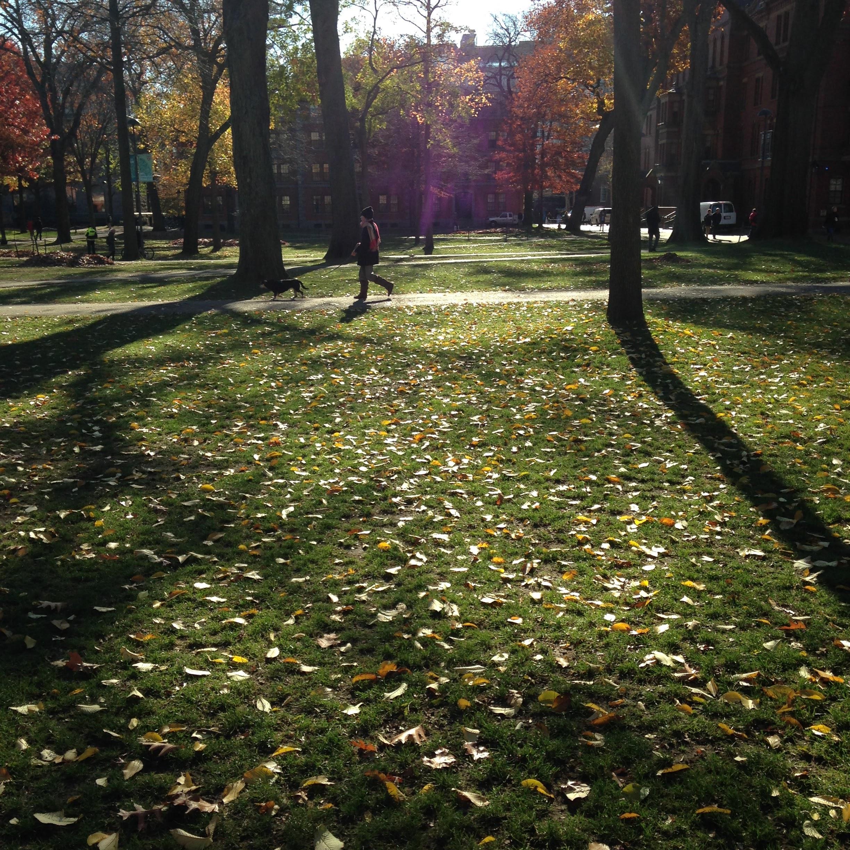 harvard yard leaves light