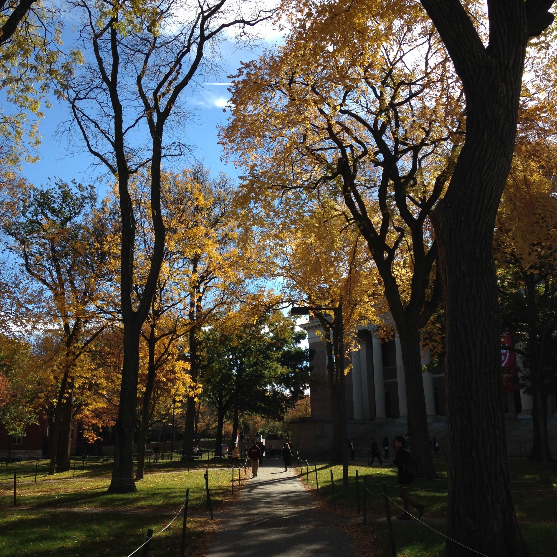 harvard yard path trees light